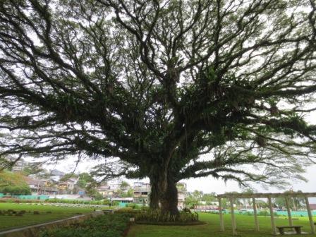 Scotsabroad Weblog Return Ambon Visited Siwa Lima Museum Lonthoir Banda