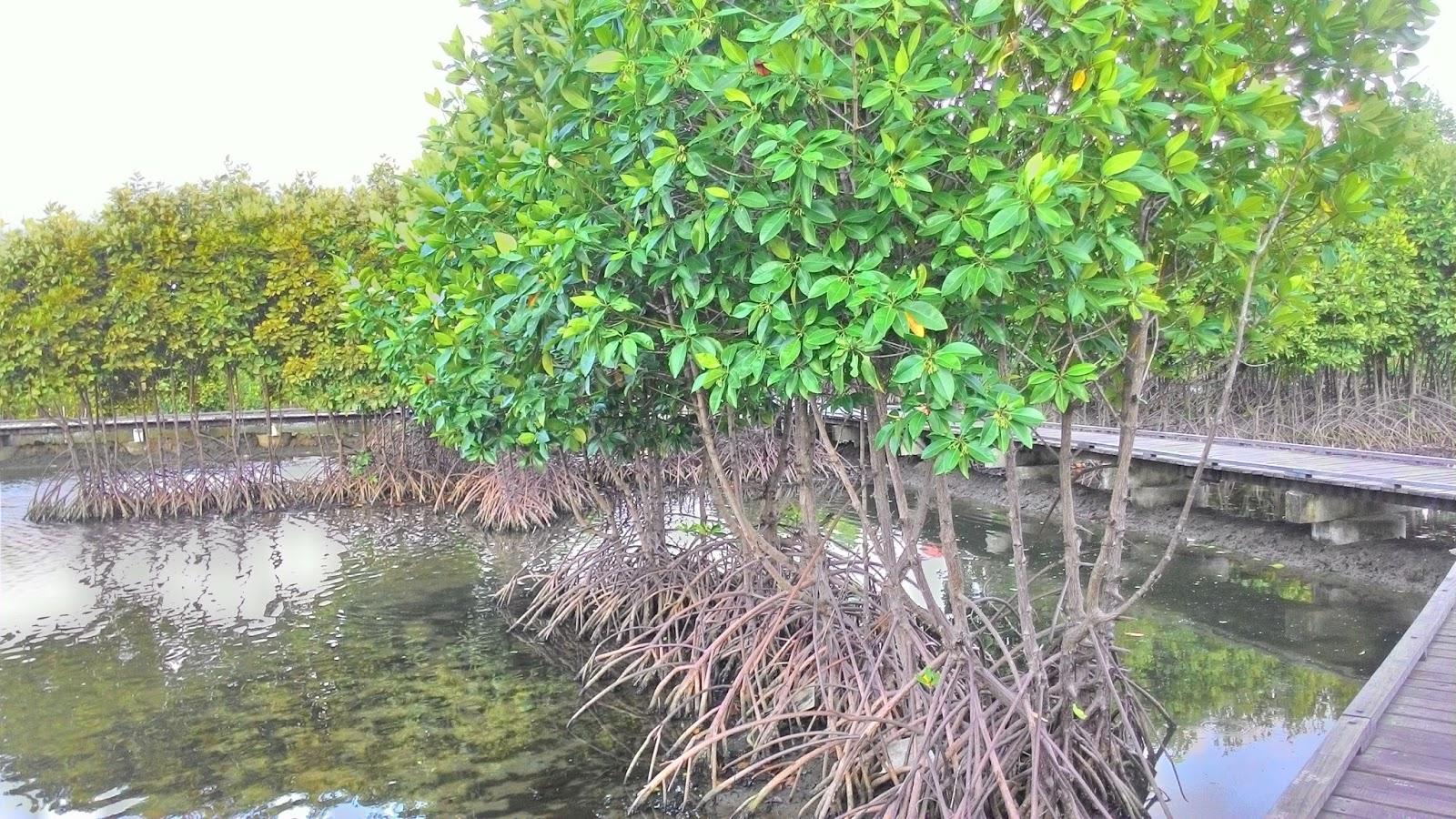 Hutan Kota Banda Aceh Berawal Mimpi Nowayreturn Bulan Mei 2011