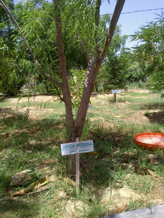 Hutan Kota Bni Banda Aceh Acehpedia Berfungsi Menjaga Ekologi Sebagai
