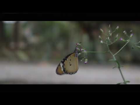 Hutan Kota Bni Banda Aceh Youtube