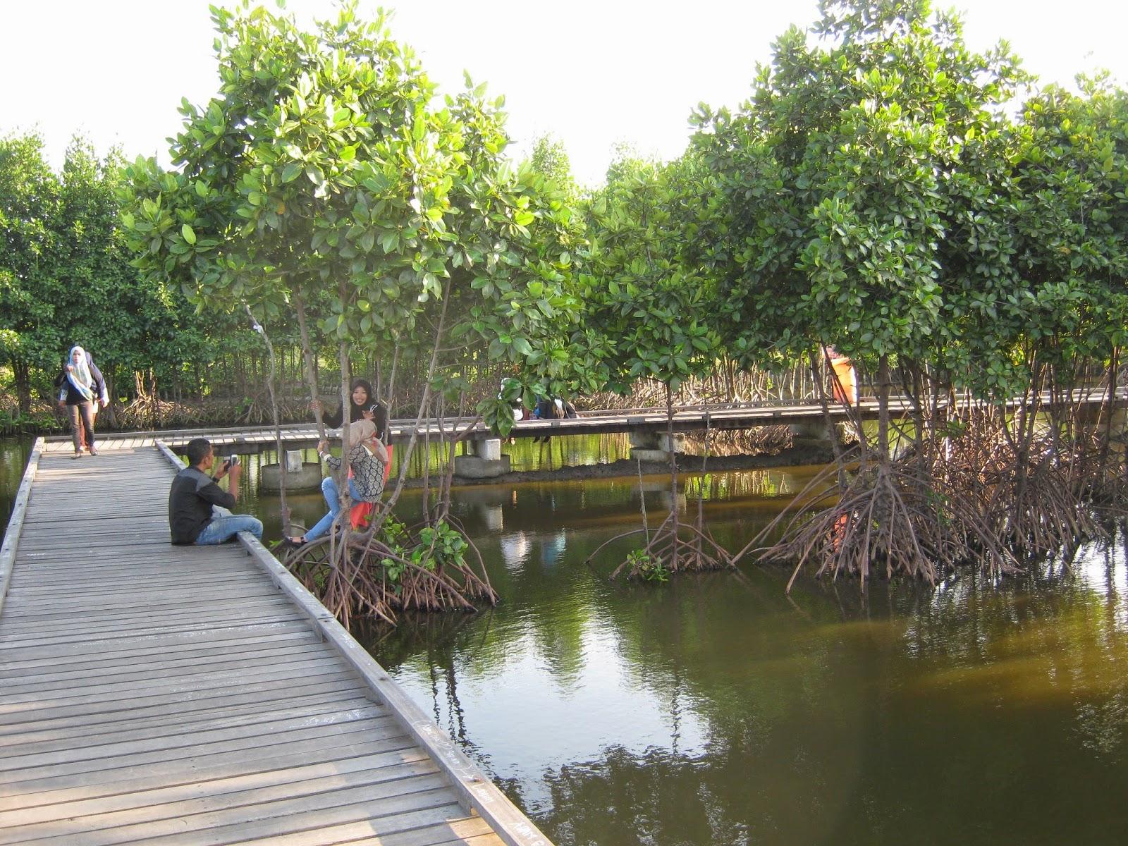 Liburan Hutan Kota Banda Aceh Steemit Bni