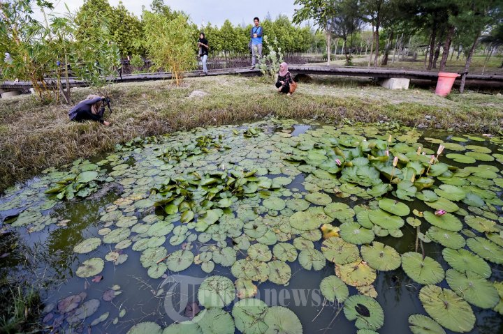 Pengunjung Nikmati Taman Hutan Kota Tibang Foto 4 1352252 20141002