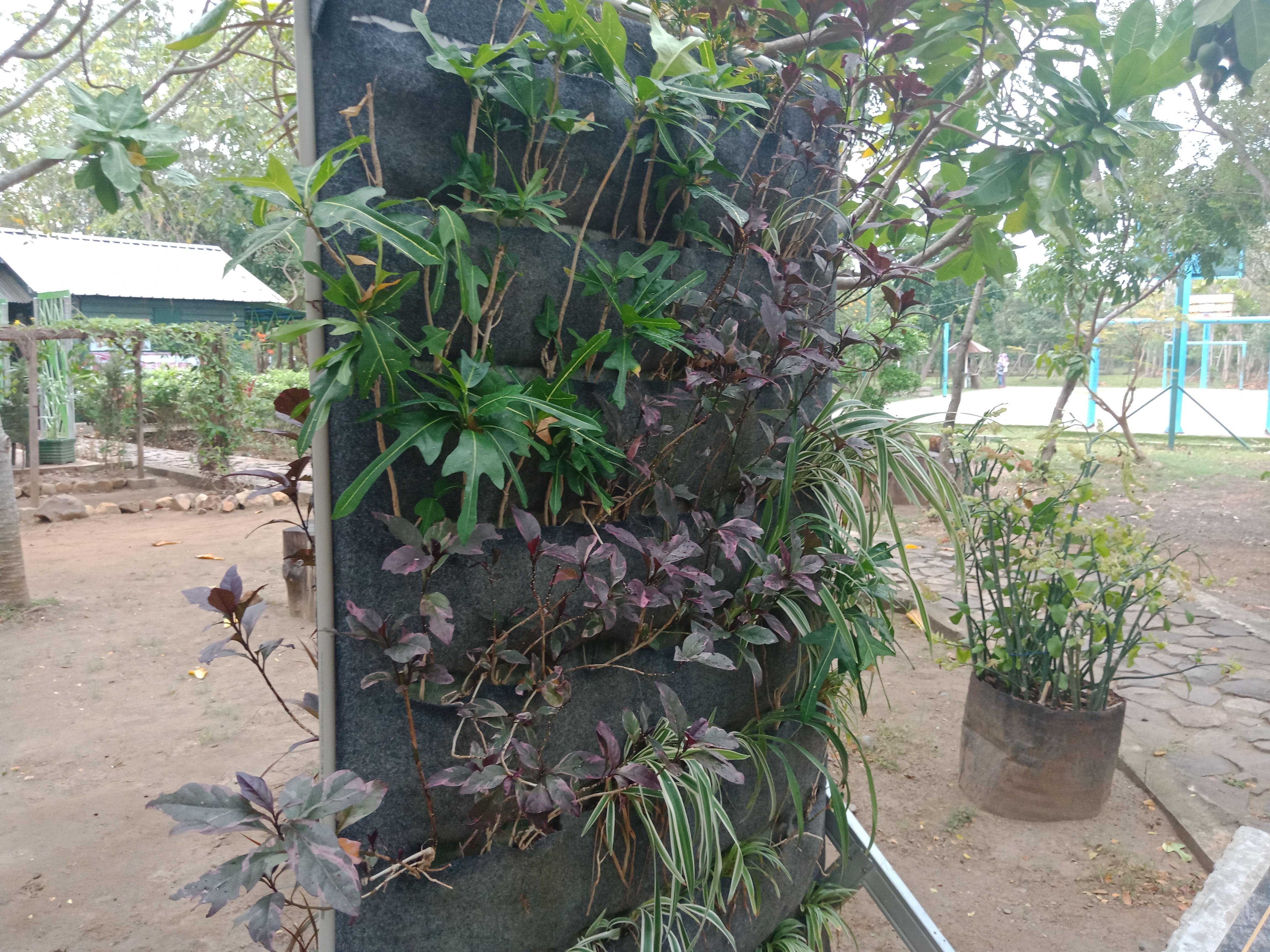 Taman Hutan Kota Bni Banda Aceh Wajib Kunjungi Steemit Istilah