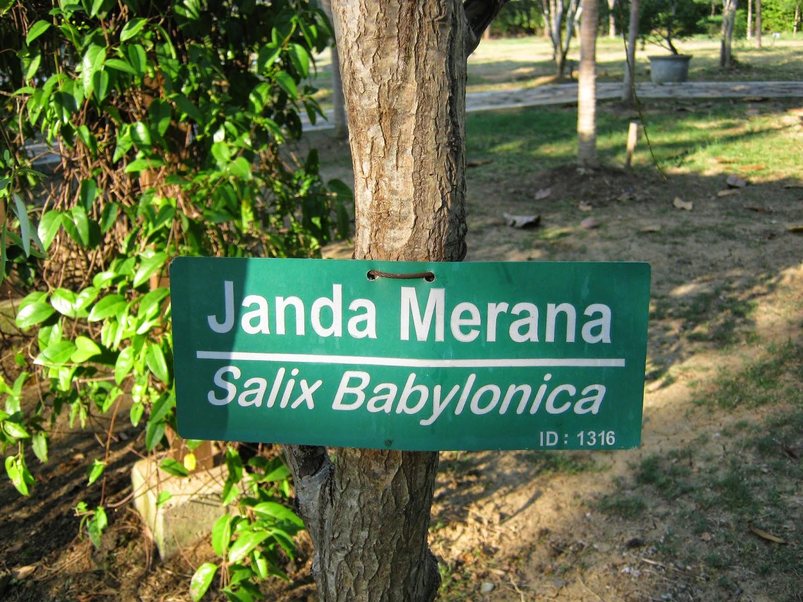 Terpesona Hutan Kota Bni Banda Aceh Seuramoe Liza Janda Merana