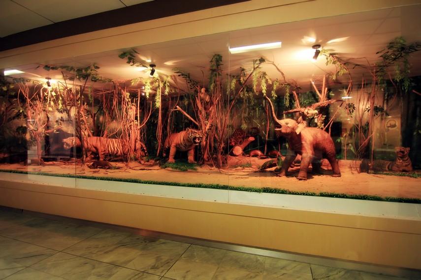 Museum Negeri Lampung Mengabadikan Sejarah Bumi Ruwa Jurai Diorama Aneka