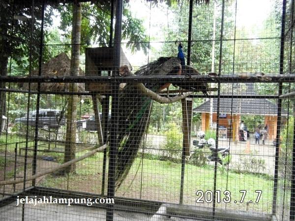 23 Tempat Wisata Menarik Bandar Lampung 2018 Taman Dipangga Kota