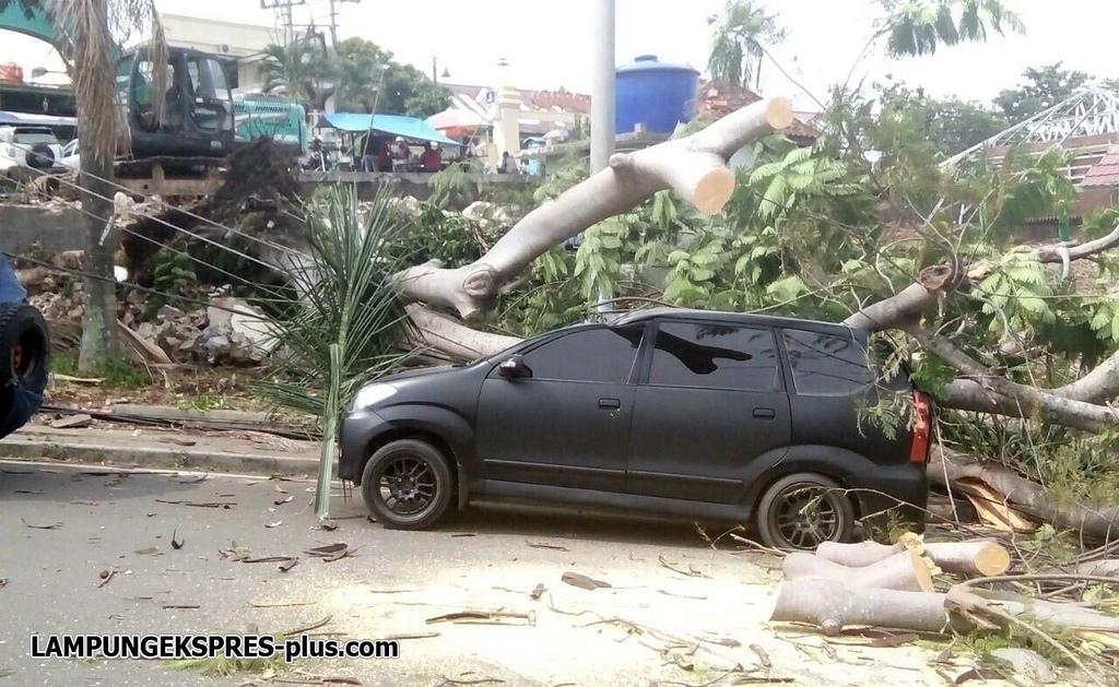 Mobil Polisi Tertimpa Pohon Taman Dipangga Lampung Ekspres Bandarlampung Le