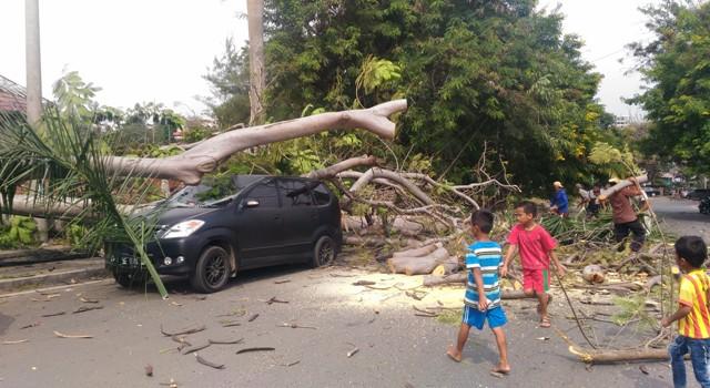 Penebangan Pohon Taman Dipangga Bandar Lampung Timpa Avanza Toyota 1978