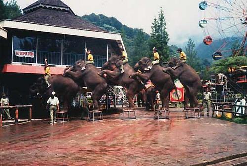 10 Tempat Wisata Rekomendasi Lampung Timur Taman Kambas Gajah Kota