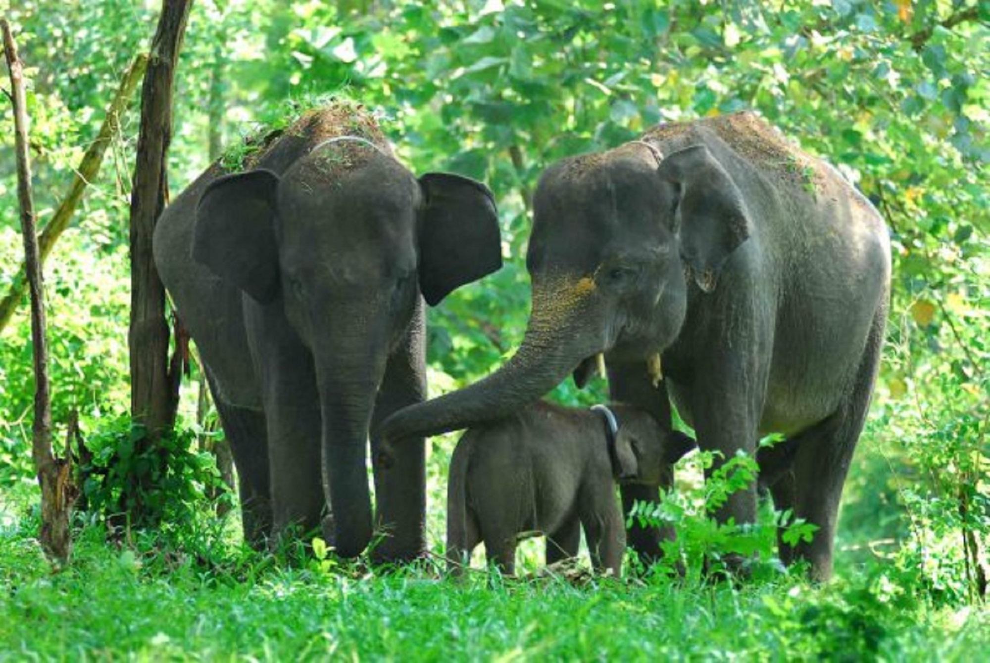 12 Tempat Wisata Menarik Lampung Wisatania Taman Gajah Kota Bandar