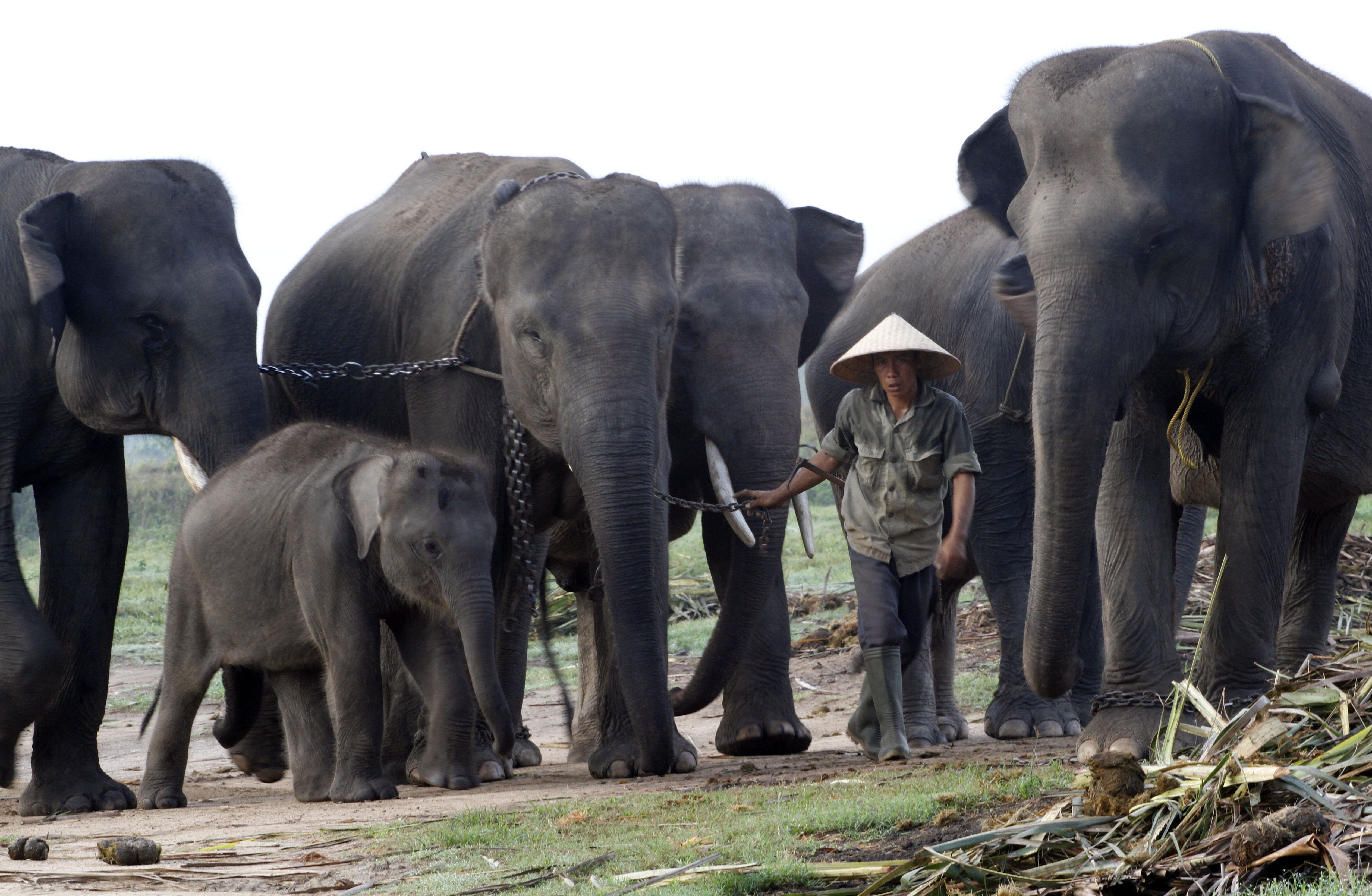 Konservasi Gajah Kambas Lampung Timur Berita Daerah Taman Kota Bandar