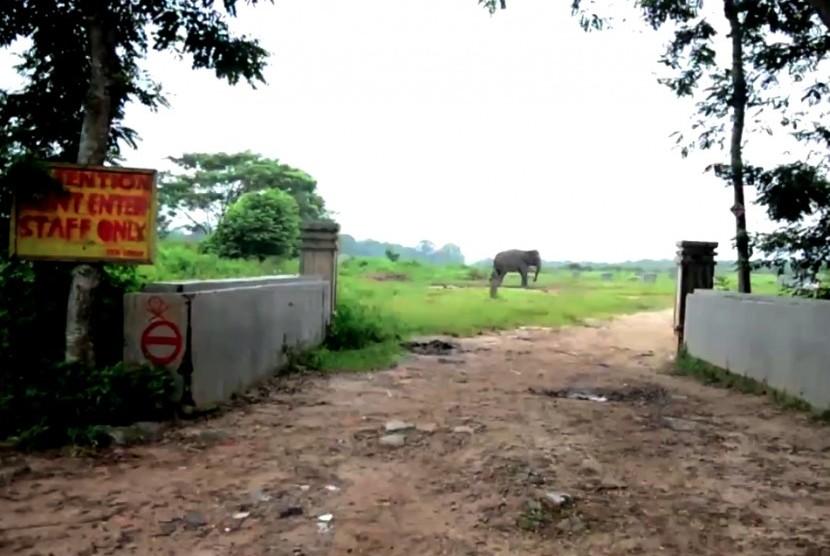Melongok Taman Nasional Kambas Republika Online Gajah Lampung Kota Bandar