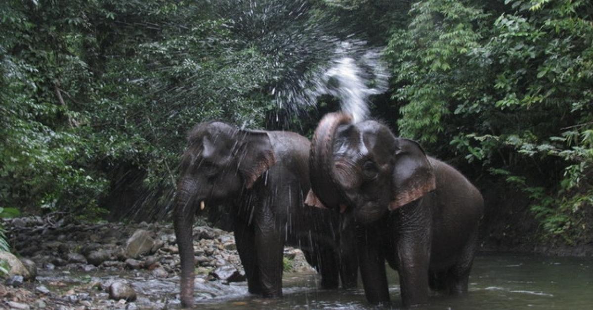 Taman Nasional Kambas Lampung Nikmati Serunya Naik Gajah Tempat Penangkaran