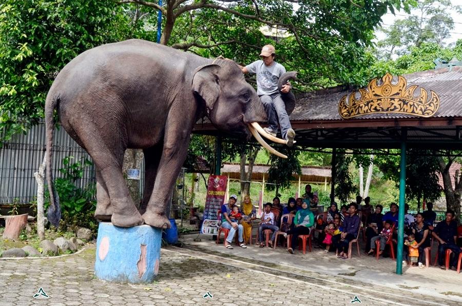 Taman Wisata Bumi Kedaton Lampung Eloratour Dokar Atraksi Gajah Kota