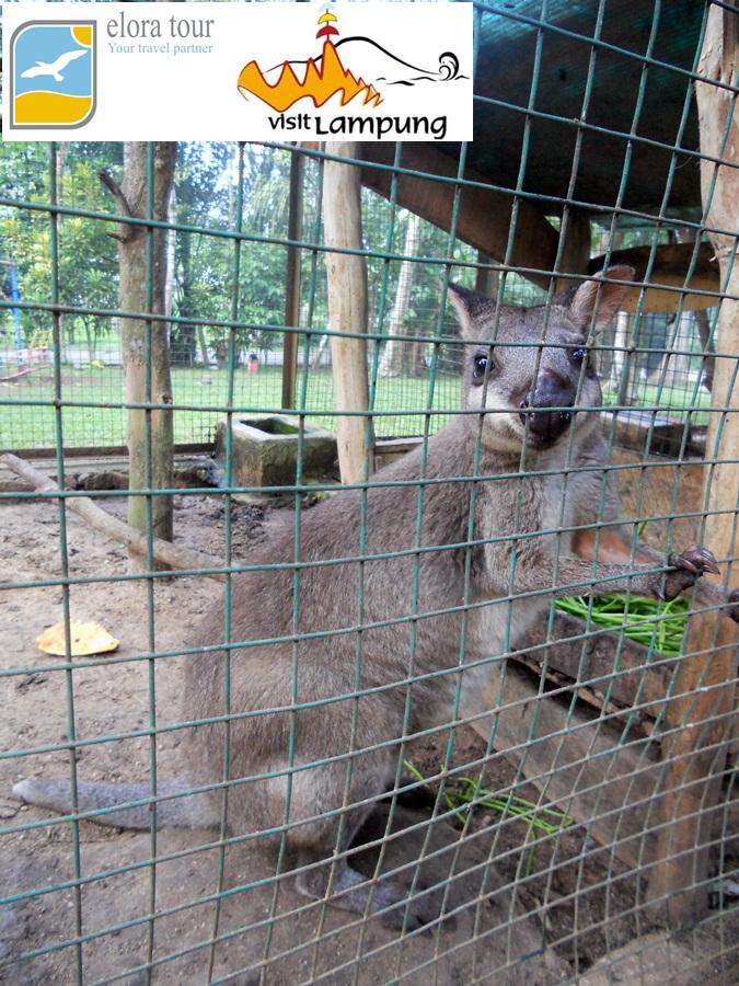 Taman Wisata Bumi Kedaton Lampung Eloratour Koleksi Satwa Kebun Binatang