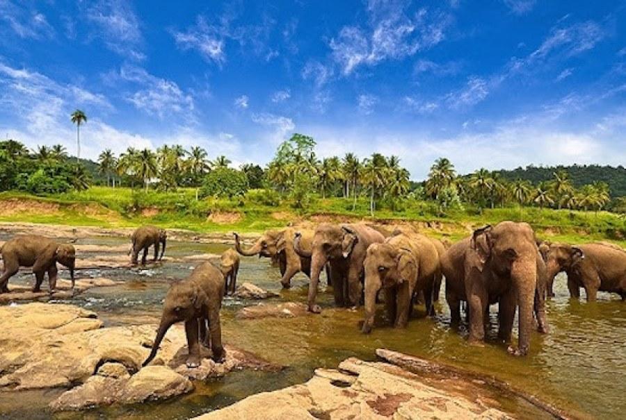 Tempat Bandar Lampung Kalian Datangi Taman Gajah Kota