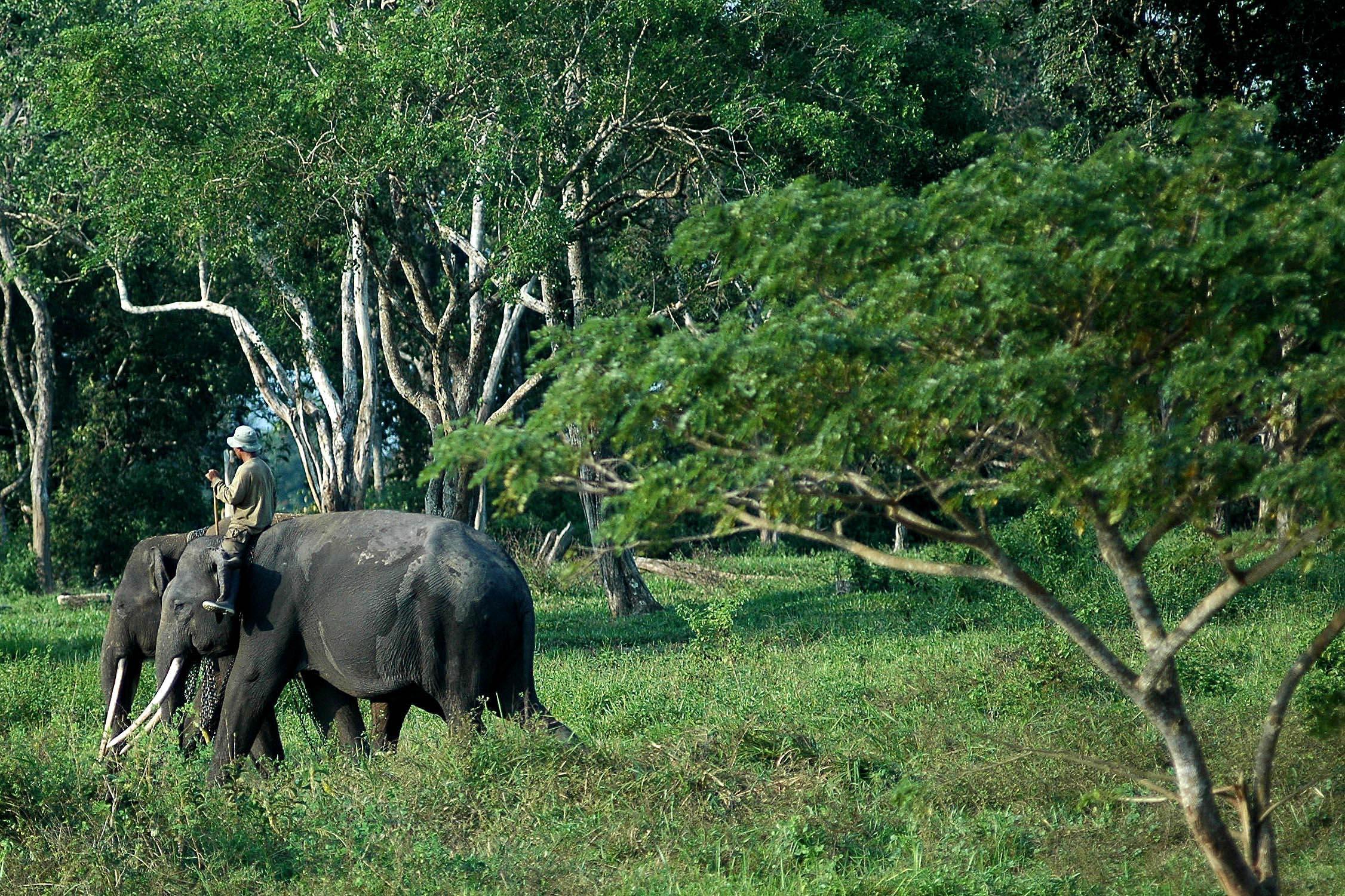 Tempat Wajib Kunjungi Lampung Toko Mesin Kota Bisa Taman Nasional