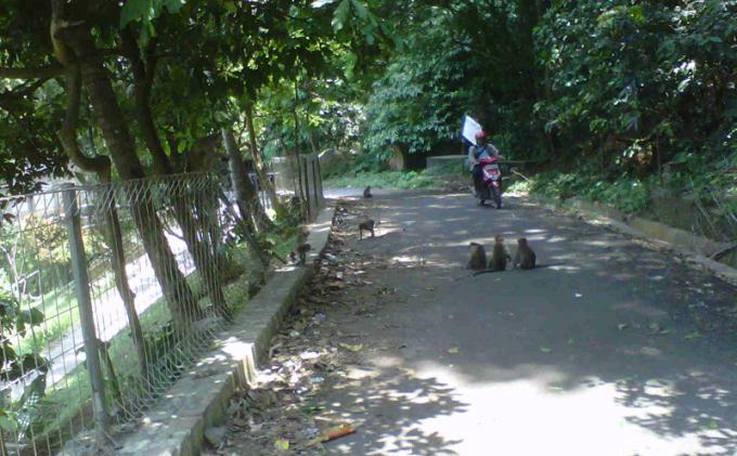 Asal Usul Kera Taman Hutan Sumur Batu Bandar Lampung Wisata