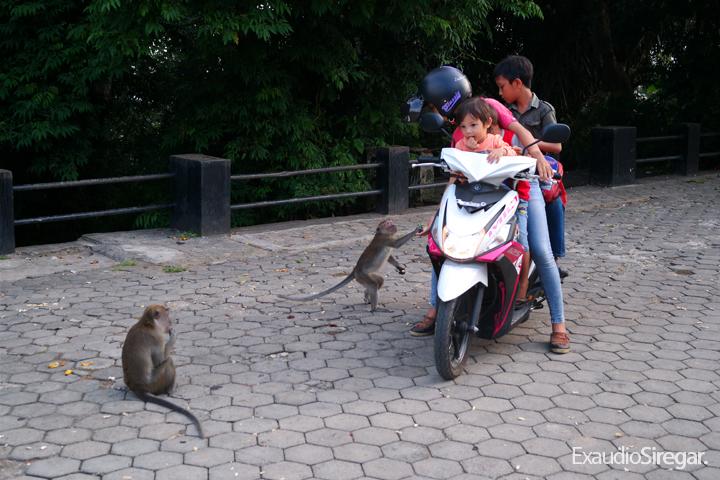 Bercengkerama Kera Hutan Memberi Makan Taman Wisata Kota Bandar Lampung