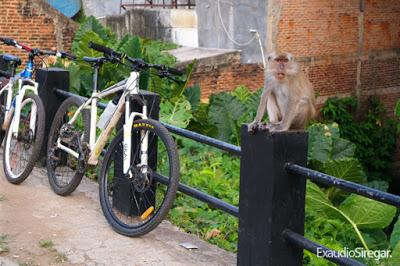 Bercengkerama Kera Hutan Taman Wisata Kota Bandar Lampung