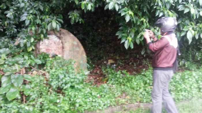 Bunker Jepang Hutan Kera Tribun Lampung Taman Wisata Kota Bandar