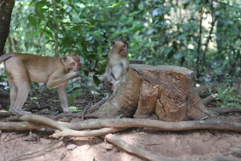 Hiburan Pesona Hutan Kera Nepa Sampang Rri Portal Berita Radio