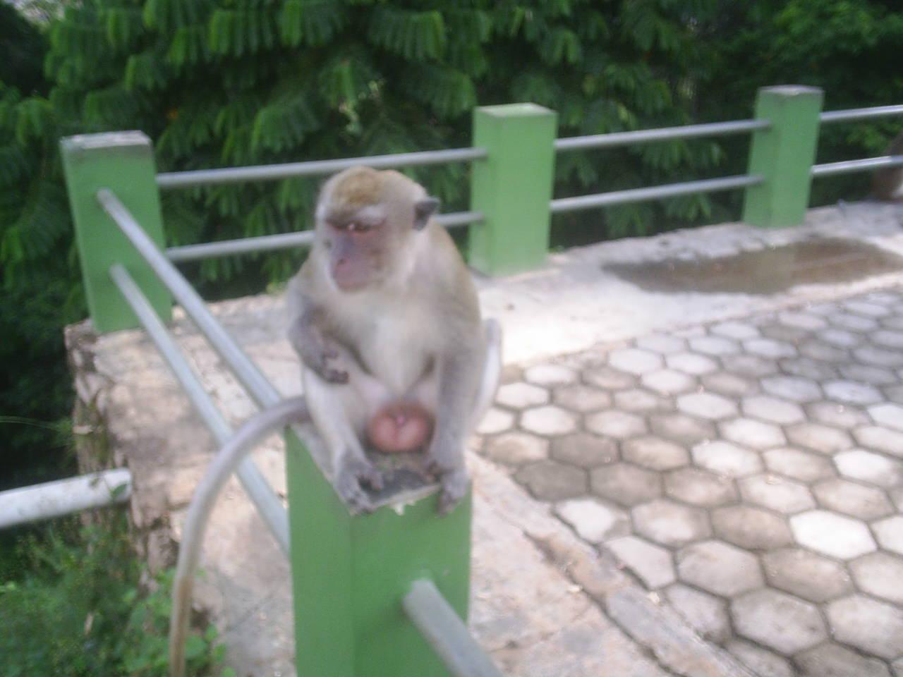 Hutan Kera Kota Bandar Lampung Kawasan Objek Wisata Bersebelahan Hotel