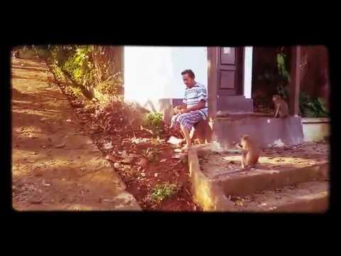 Hutan Kota Taman Monyet Tirtosari Bandar Lampung Youtube Wisata Kera
