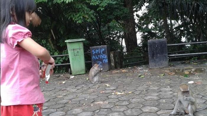 Lampung Taman Hutan Kera Bandarlampung Pengunjung Memberi Makan Tirtosari Wisata