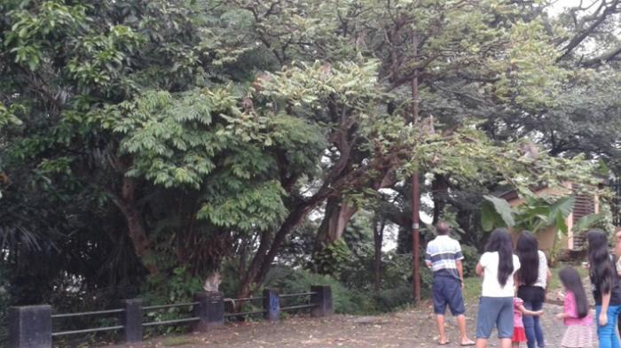 Menikmati Udara Sejuk Kera Bergelantungan Tengah Kota Tribun Lampung Heru