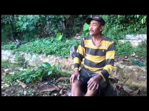 Penghuni Hutan Kera Bandar Lampung Berganti Tiga Youtube Taman Wisata