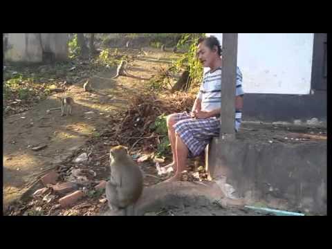 Subagyo Pengurus Hutan Taman Monyet Bandar Lampung Youtube Wisata Kera