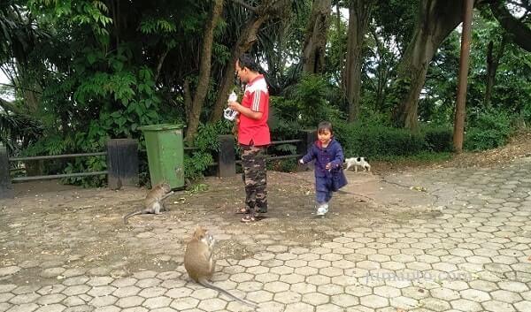 Taman Hutan Kera Bandar Lampung Tahu Wisata Kota