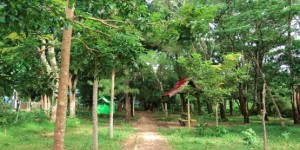 Taman Hutan Kota Halim Tempat Wisata Bandar Lampung Foto Ist
