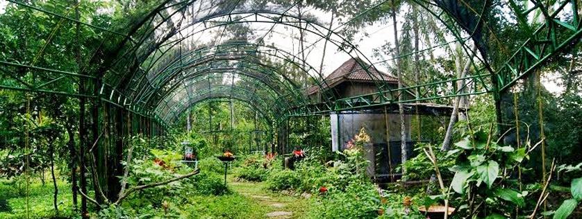 Taman Kupu Bandar Lampung Universitas Malahayati Wisata Hutan Kera Kota