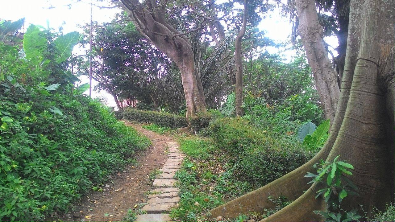 Taman Monyet Bandar Lampung Wisata Alternatif Tengah Kota Hutan Kera