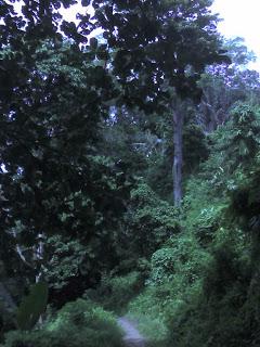 Teluk Betung Kotaku Hutan Wisata Kera Bandar Lampung Kawasan Gambar