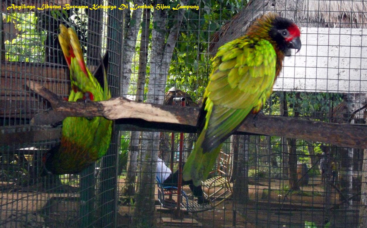 Asyiknya Liburan Bersama Keluarga Lembah Hijau Lampung Taman Wisata Kota