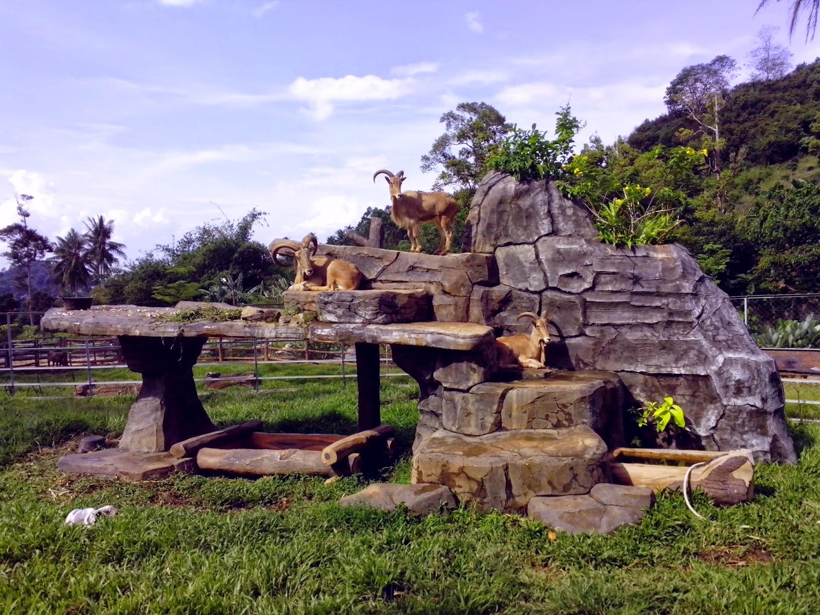Lampung Traveller Objek Wisata Lembah Hijau Sepenggal Surga Bumi Taman