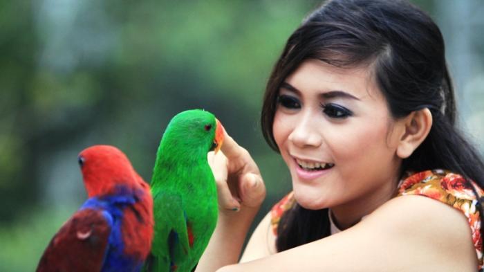 Lembah Hijau Wisata Alam Terlengkap Lampung Mulai Taman Satwa Hingga