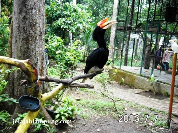 Lembah Hijau Wisata Alam Waterboom Terbesar Lampung Membuatmu Takjub Taman