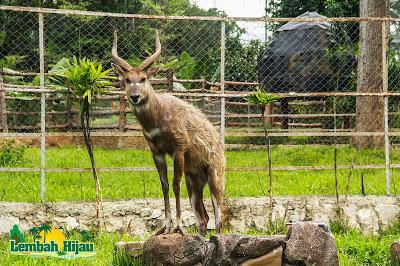 Menikmati Wisata Lembah Hijau Taman Sejuk Satwa Img Credit Kota