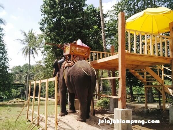 Naik Gajah Taman Satwa Lembah Hijau Lampung Wisata Kota Bandar