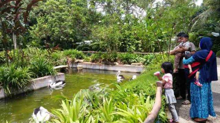 Taman Satwa Lembah Hijau Berbentuk Cluster Tribun Lampung Wisata Kota
