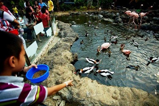 Index Wp Content Uploads 2012 08 Batu Secret Zoo Jawa