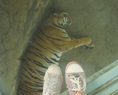 Jatim Park Ii Recreation Batu Secret Zoo Animal Museum Feed
