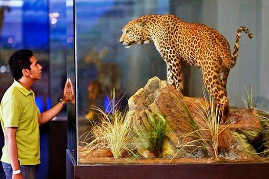 Museum Satwa Jawa Timur Park 2 Malang Guidance Kota Batu