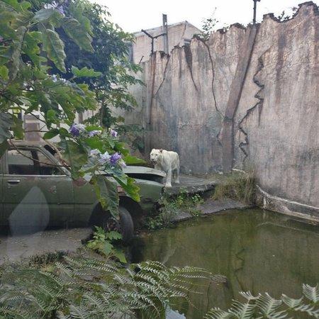 Batu Secret Zoo Jawa Timur Park 2 2018 3 Kota