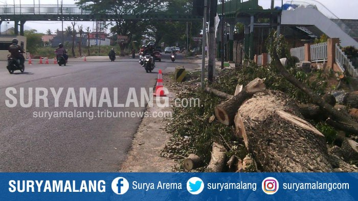 Muncul Polemik Terkait Penebangan Pohon Sekitar Jatim Park 3 Kota