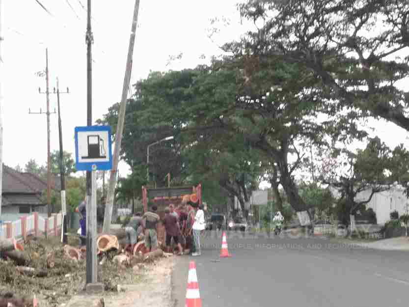 Penebangan Pohon Depan Jatim Park 3 Dianggap Menyalahi Aturan Sejumlah